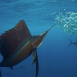 Ketahui Apa Yang Ikan Lihat